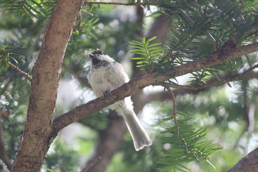 THE PARKLODGE上高地の前でもよく見られる野鳥です